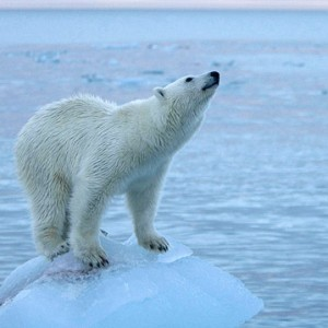 BASIC: On The Same Page For Climate Change