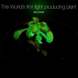 BioGlow: Glow In The Dark Trees Replacing Streetlights?