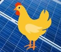 Australian Poultry Farmers Seek Solar Power