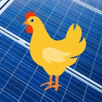 Australian Poultry Farmers Seek Solar Power